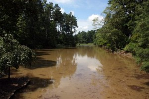 Muddy Water in Ponds