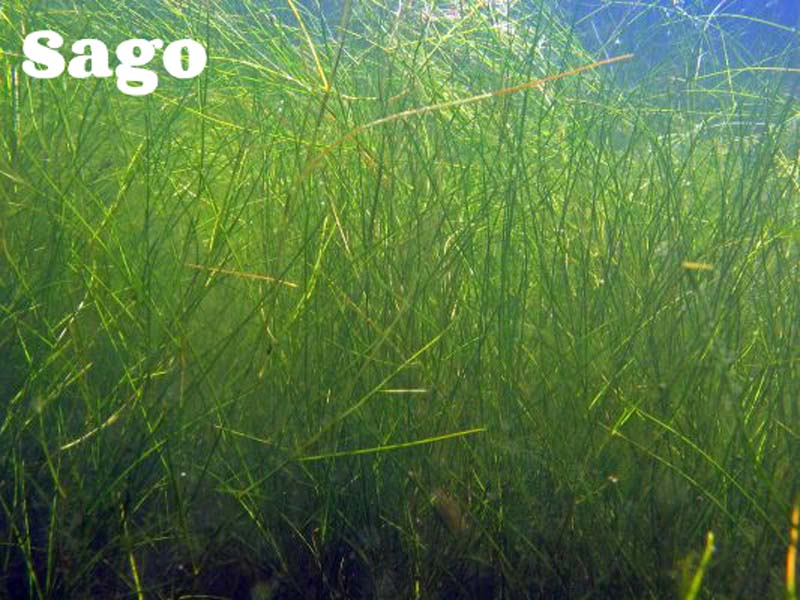 Identifying Aquatic Weeds & Algae